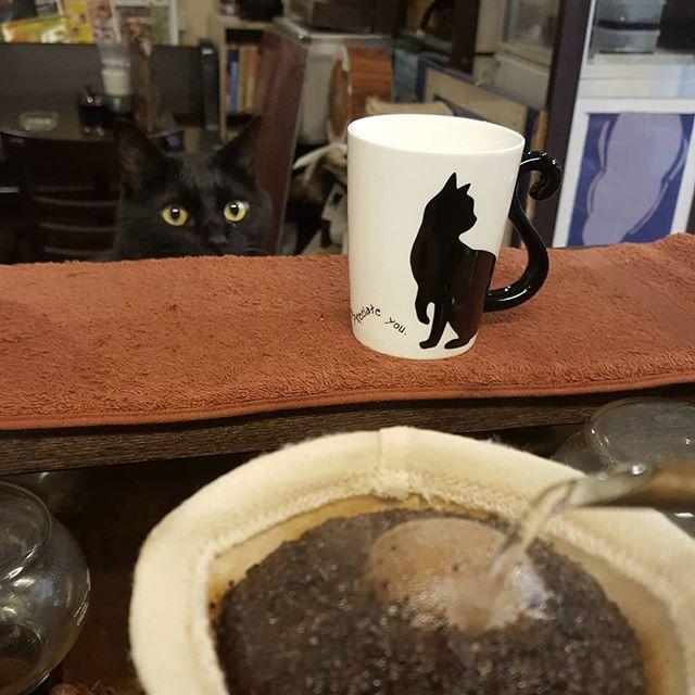 #珈琲と猫と煙草と ...朝からおねだり(笑)