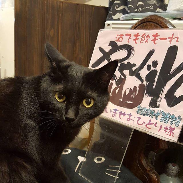 #珈琲と猫と煙草と ...にゃさぐれFriday!