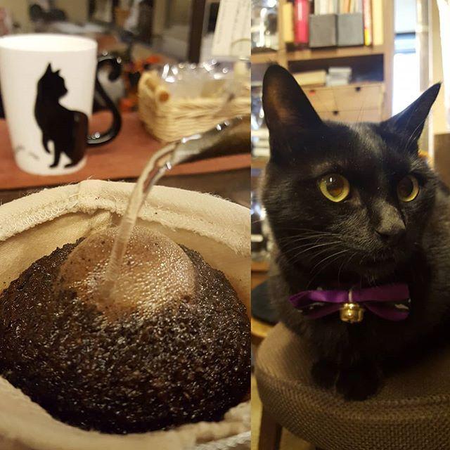 #越後屋珈兵衛 #黒猫ナッツ #自家焙煎