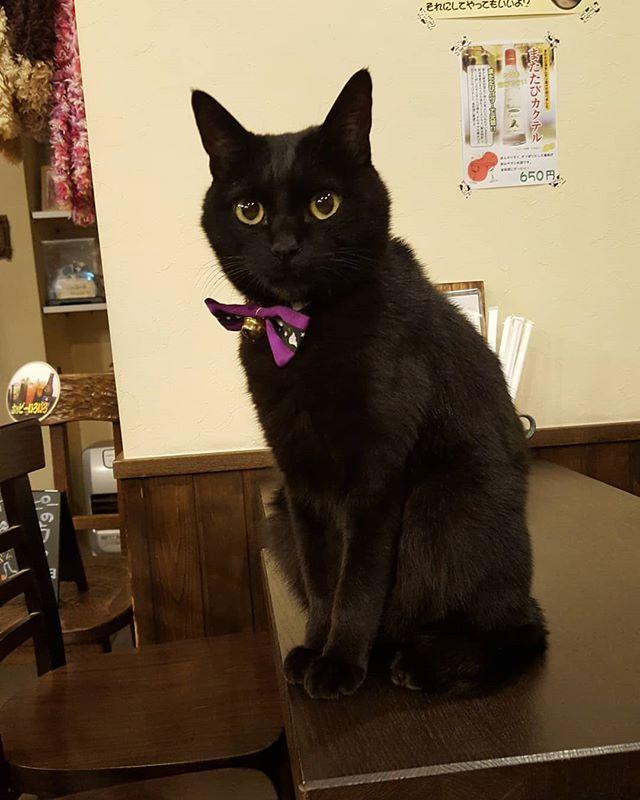 ただいま、A卓とカウンター数席空いております。ナッツの指名料はいただきません(笑)#黒猫 #黒猫ナッツ #越後屋夜の部 #珈琲焼酎 #おっさんず酒バー  #長岡